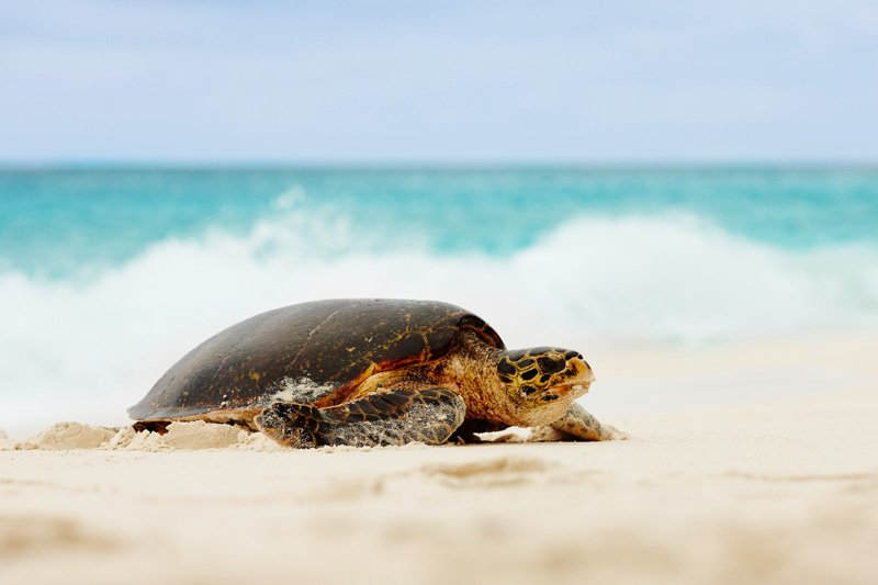 fregate_island_private_conservation_turtle_2
